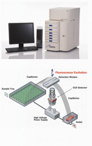 Fragment Analyzer Automated CE System