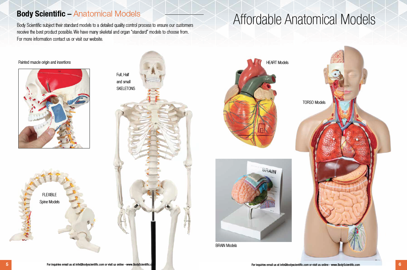 Affordable Anatomical Models Body Scientific