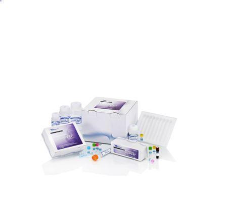 Molecutech REBA HP-ID