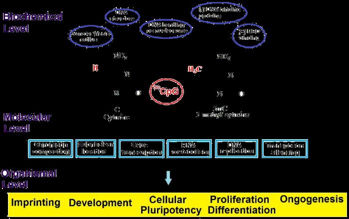 Methylation Sequencing-Yourgene Bioscience
