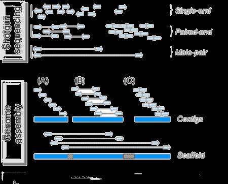 DNA De Novo Sequencing-Yourgene Bioscience