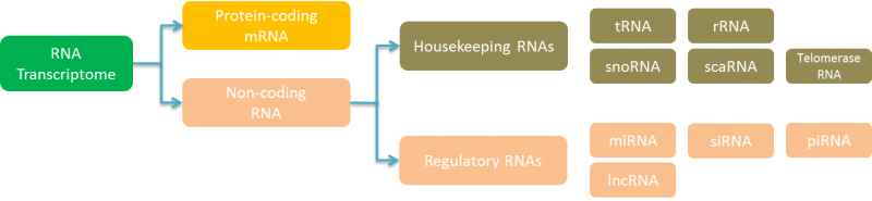 RNA Sequencing-Yourgene Bioscience