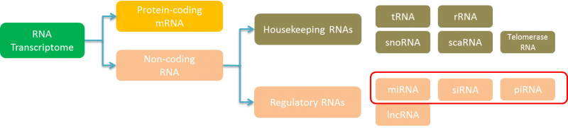 Small RNA Sequencing-Yourgene Bioscience