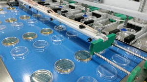 Industrial lines for filling petri dishes