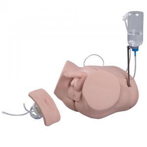 Catheterization Simulator Set PRO