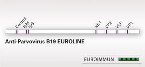 Anti-Parvovirus B19 EUROLINE