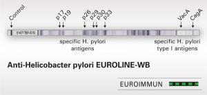 Anti-Helicobacter pylori EUROLINE-WB