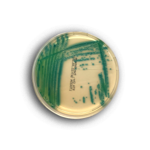 Chromogenic Pseudomonas Agar | RTA - Molecular Diagnostics and In Vitro Products