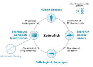 ZeGenesis - ZeClinics Zebrafish Genome Editing Disease Modeling