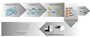 Targeted Sequencing-Yourgene Bioscience