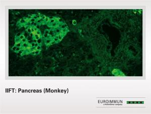 IIFT: Pancreas (Monkey)