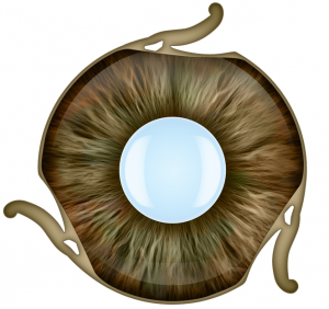 artificial iris