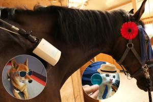 Veterinary bioresonance diagnosis and therapy by singleMatik®
