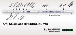Anti-Chlamydia HP EUROLINE-WB